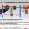 CETP阻害薬の役割