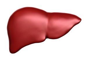肝臓と糖代謝